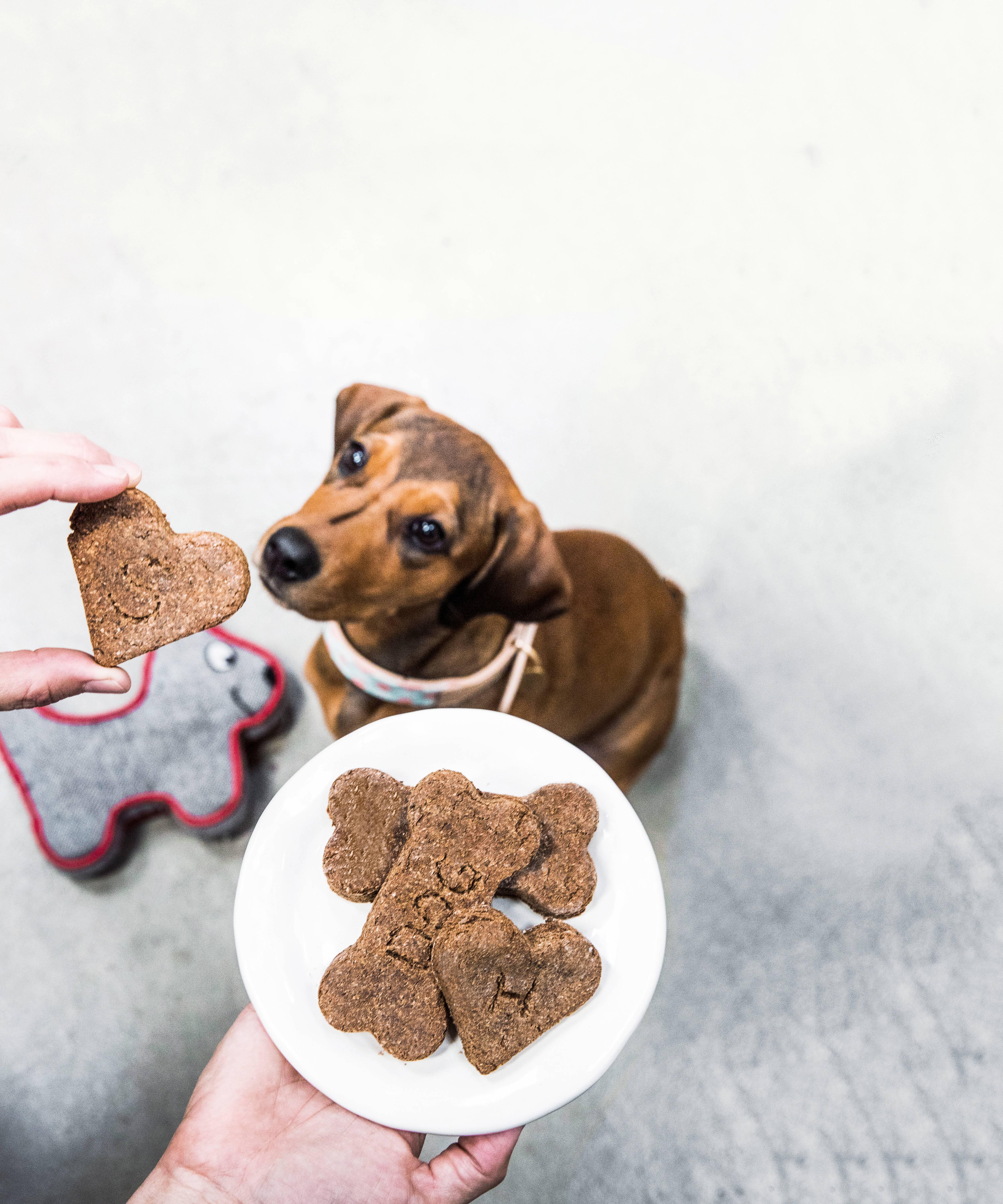 Чем поощрять собаку: какие лакомства давать щенку, собаке при дрессировке - dogtricks.ru