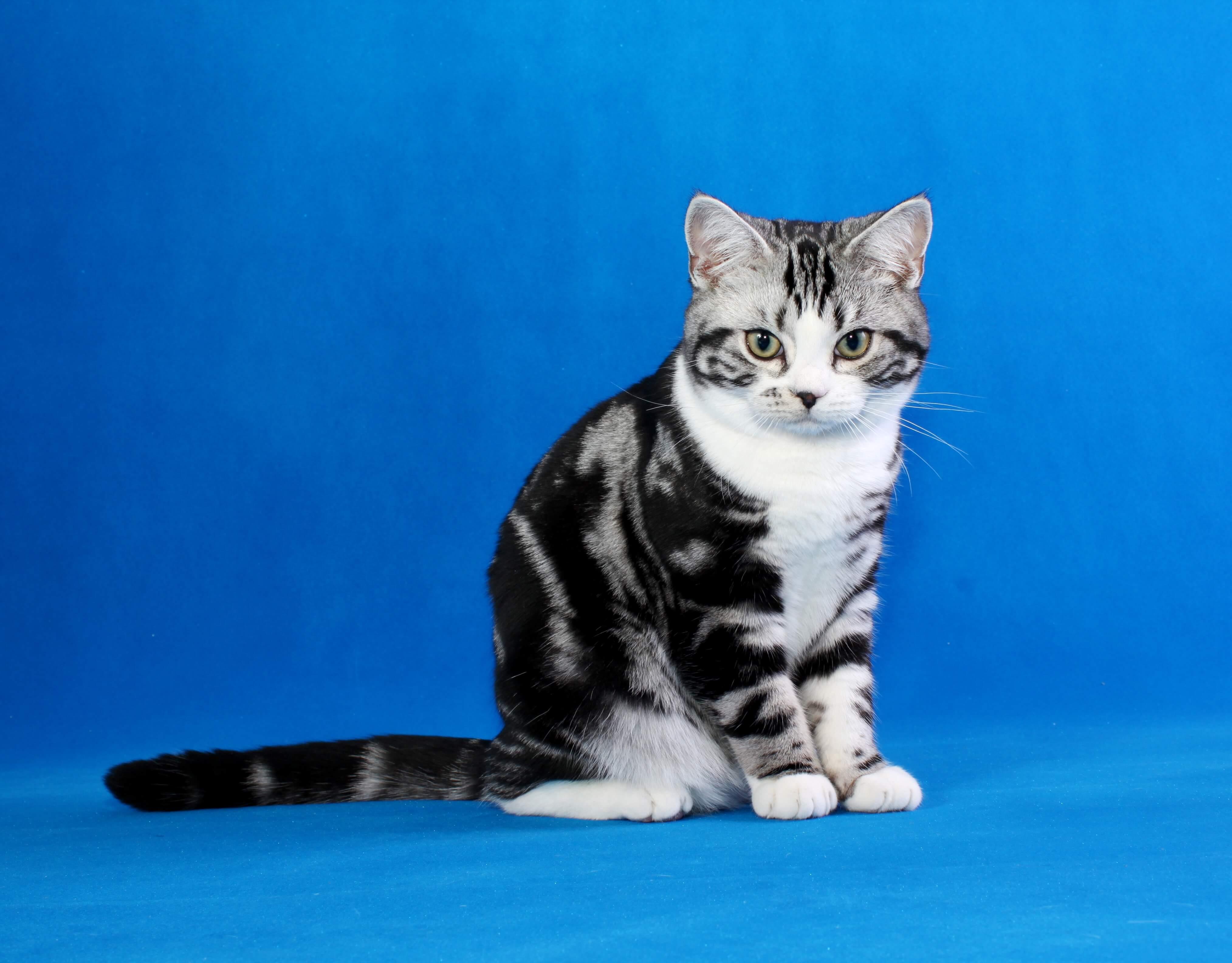 Машинка для стрижки кошек: с густой шерстью в домашних условиях и не только, а также какие из них лучше и какова цена, как выбрать и не ошибиться