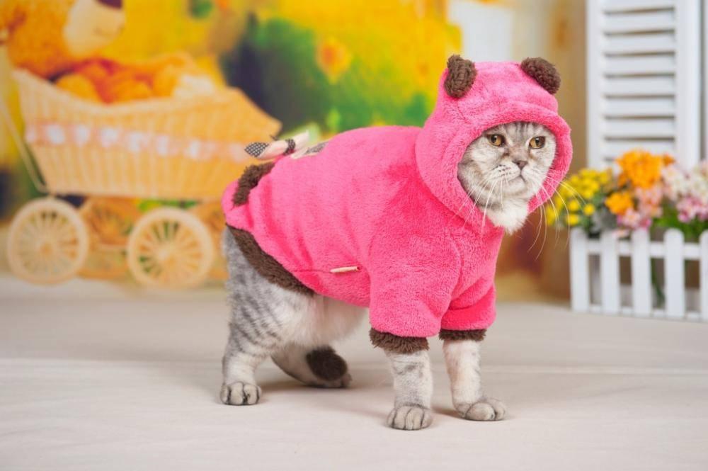 Одежда для кошек: какая бывает и как приучить к ней кота?