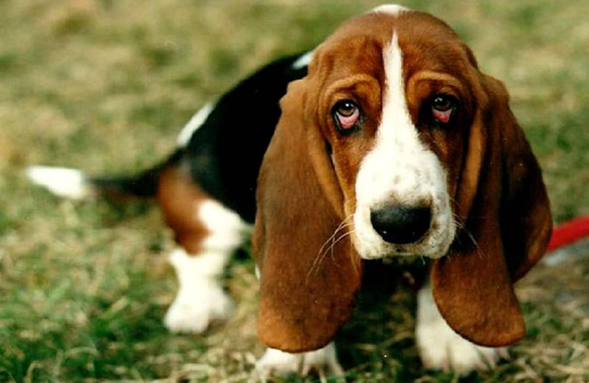 Самая страшная собака в мире — рейтинг уродливых и некрасивых пород с фото и описанием