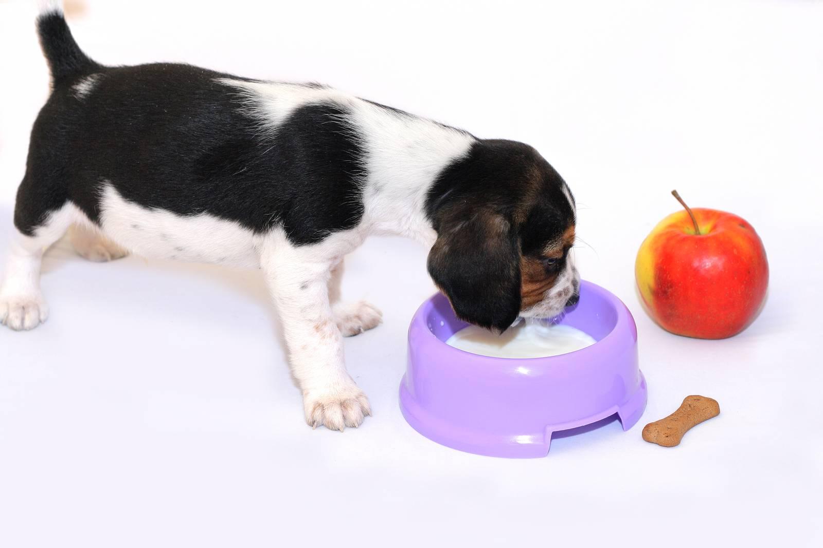 Можно ли давать собаке острую пищу? | hill's pet