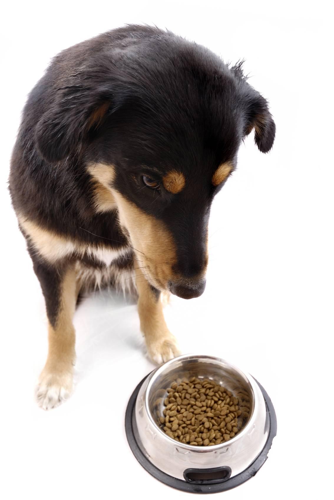 Почему собака не ест из миски, но ест с рук