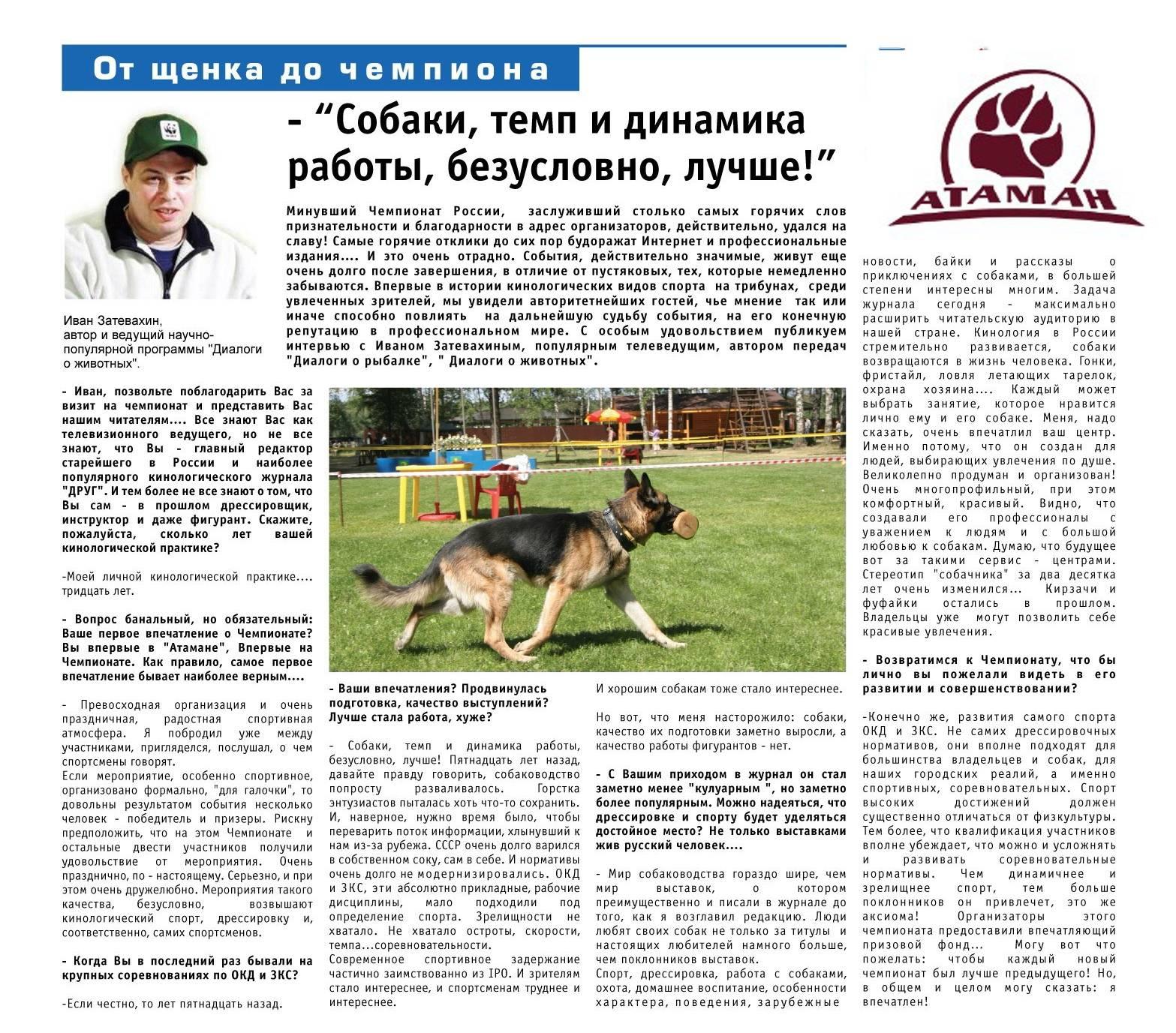 Дрессировка собак в домашних условиях для начинающих: методы и виды