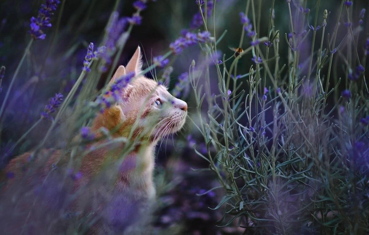 Какие запахи не любят коты, кошки и почему: список запахов
