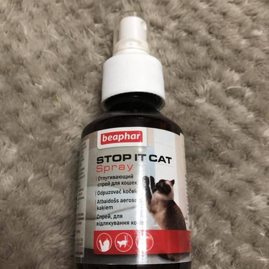 Какой запах не любят кошки: чем отпугнуть котов, чтобы не метили двери, использование спреев