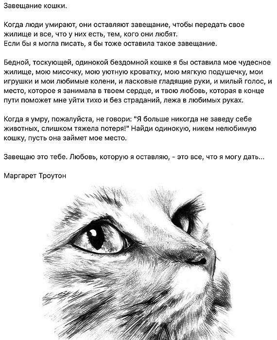 Как пережить смерть любимого кота?