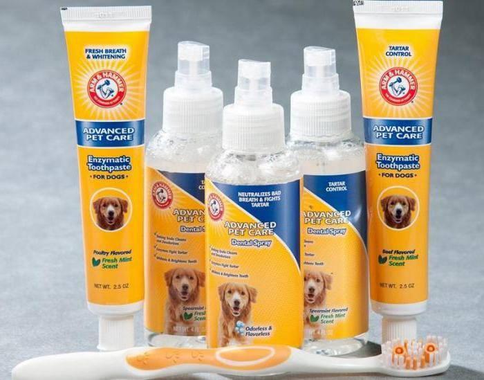 Зубной камень у собак: что такое, причины, удаление, препараты, цена | petguru