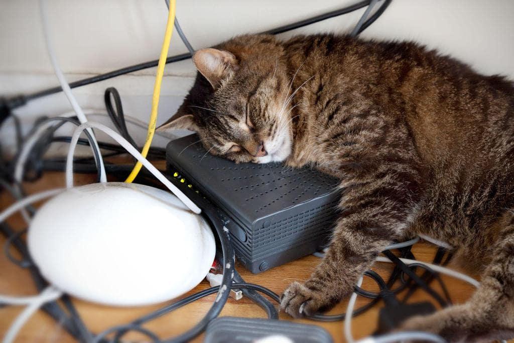 Что делать если кошка грызет провода