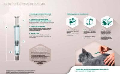 Как дать коту таблетку - 5 простых способов + видео