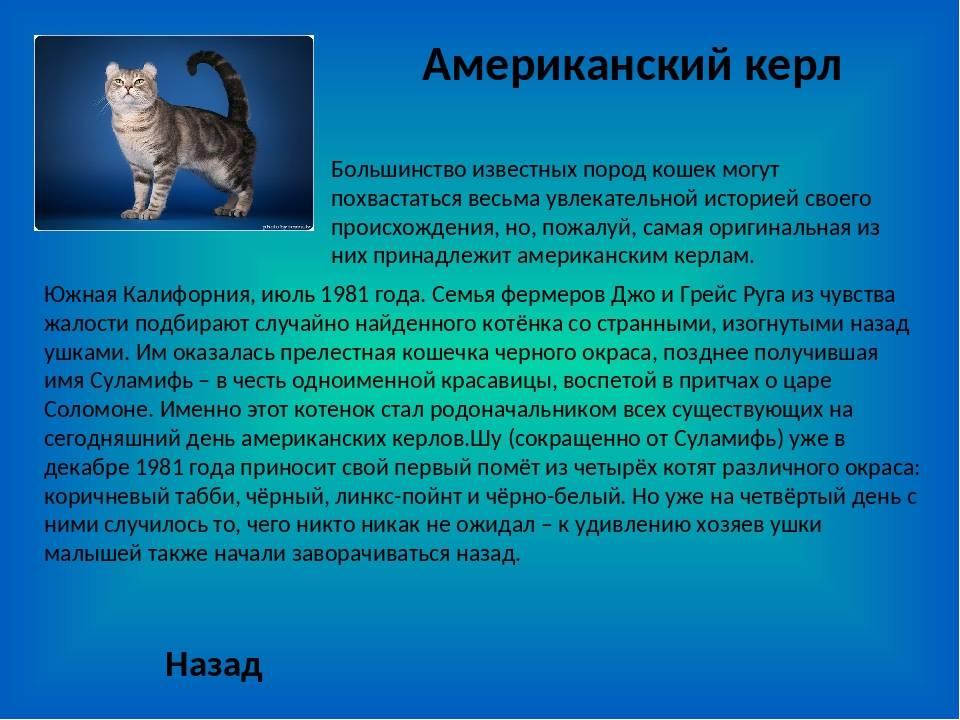 Какие существуют окрасы кошек невской маскарадной породы?