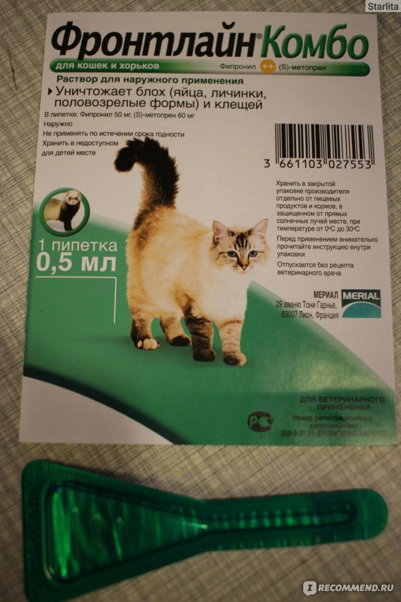 Лечение и профилактика блох у кошек