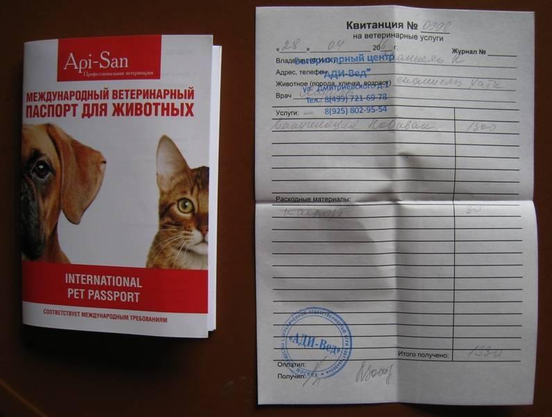 Ветеринарный паспорт для кошки: зачем нужен, особенности получения
