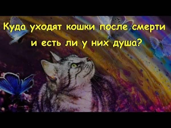 Как пережить смерть кошки - поведение кошки перед смертью, чувствуют ли кошки смерть, куда уходят умирать кошки, умерла кошка что делать, кошка после смерти - всё о кошках и котах