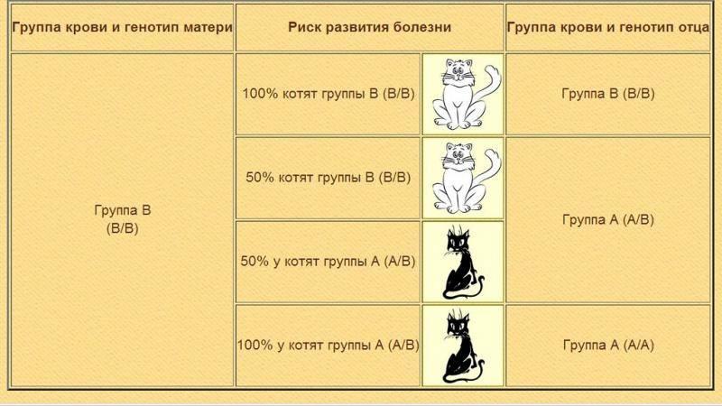 Как и чем кормить котят в 3 недели: заменители молока, смеси, промышленные корма