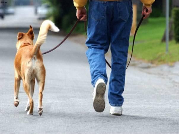Сколько лет живут собаки в домашних условиях, как продлить жизнь