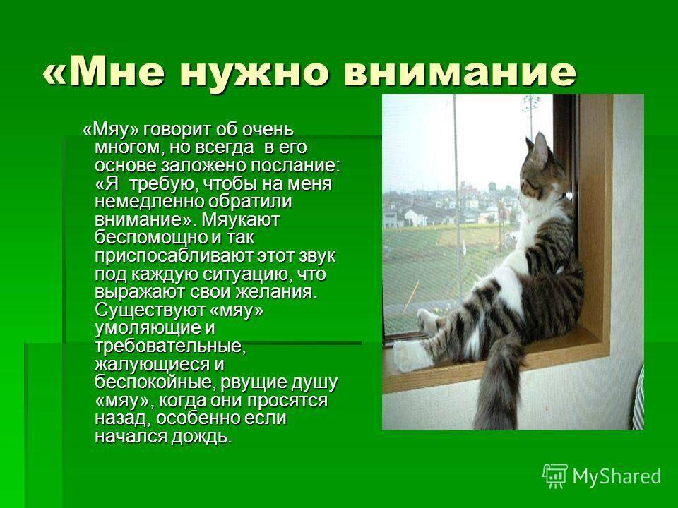 Кошачий разговор.