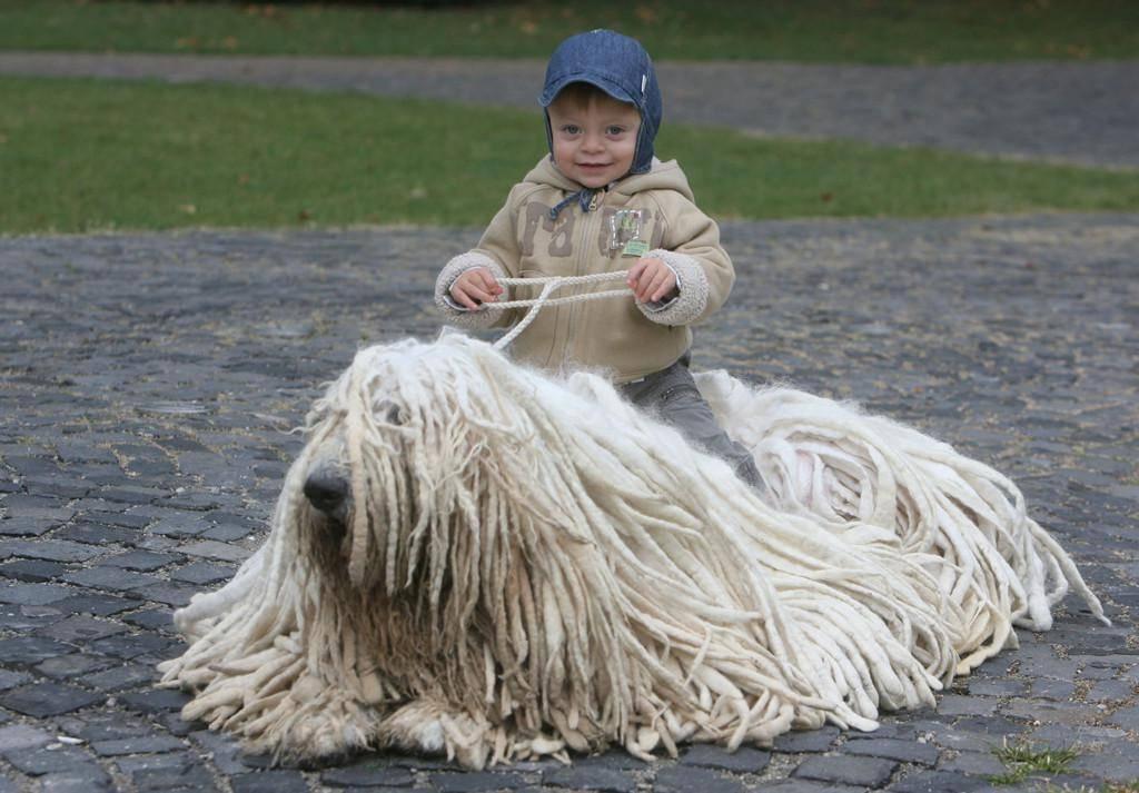 Венгерская овчарка (комондор)