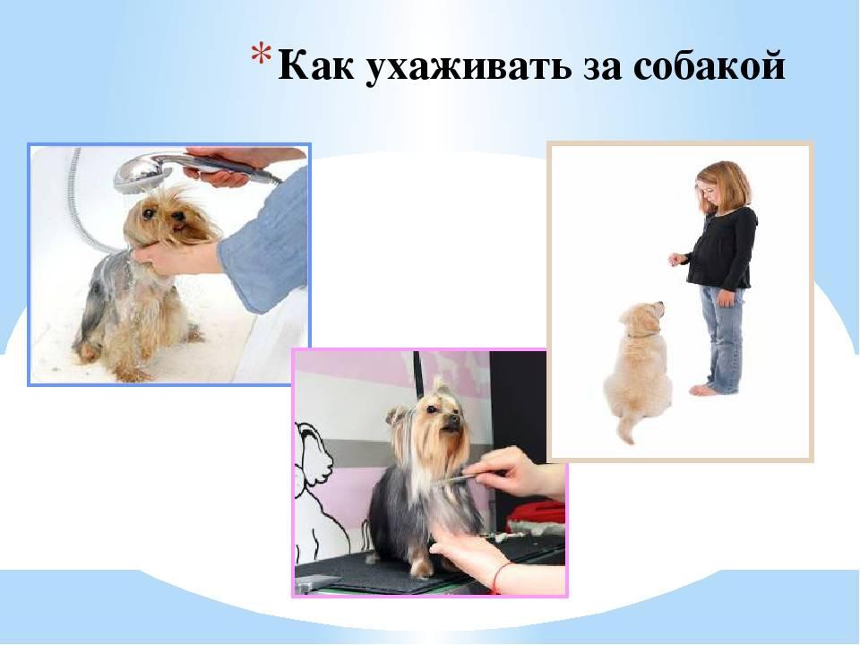 Как правильно заботиться за собаками: рекомендации по уходу за питомцем