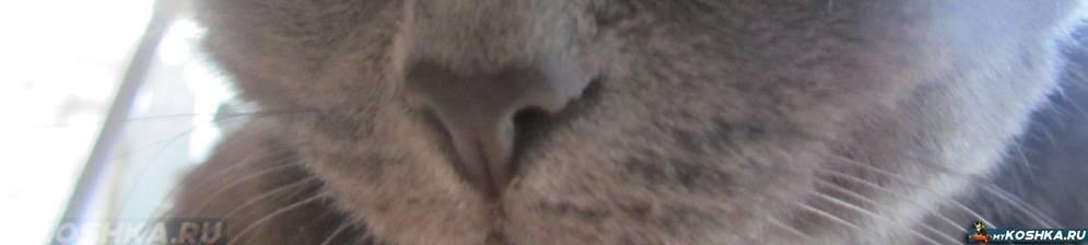 Почему у кошки нос мокрый? нормально ли это?