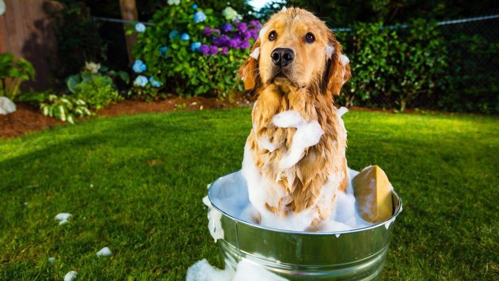 Как ведет себя щенок в жару? чем помочь собаке в жару?