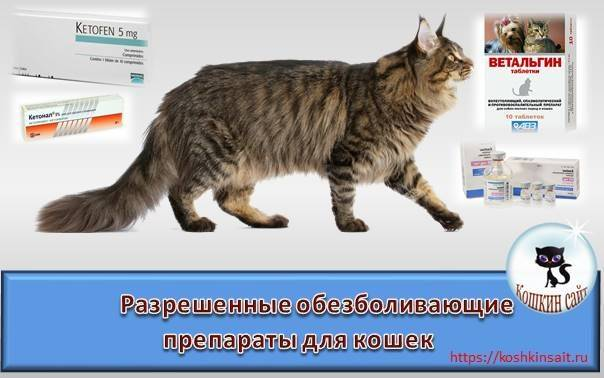 Обезболивающие для кошек в домашних условиях: разрешенные препараты - animallist.ru