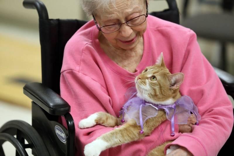 Уход за старой кошкой. советы ветеринара
