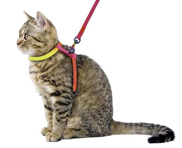 Как сделать ошейник для кошки своими руками: 10 подробных инструкций