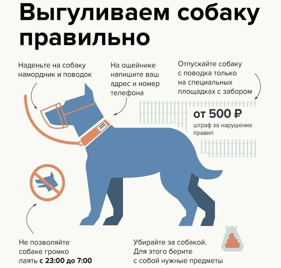 Когда лучше кормить собаку: до или после прогулки?
