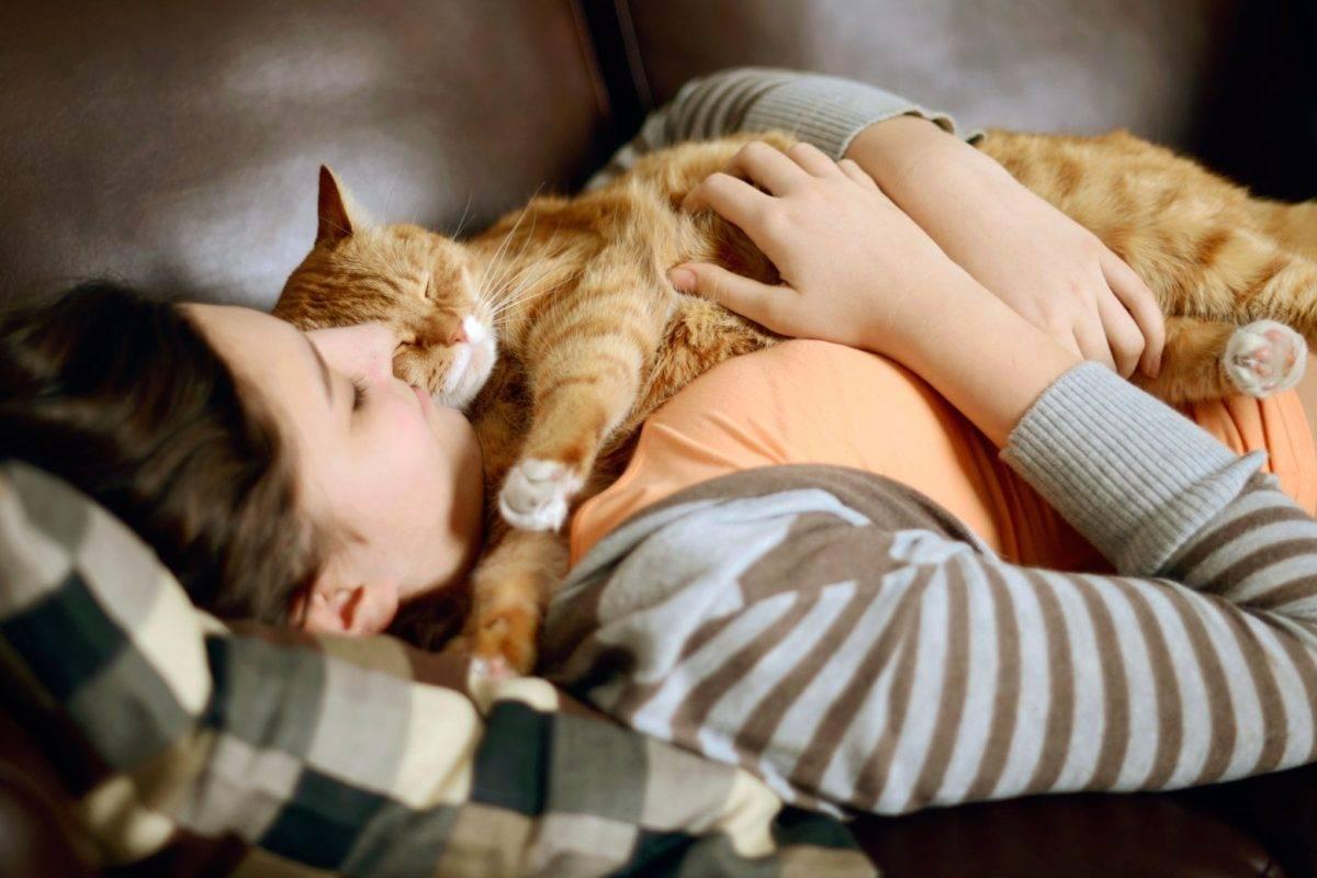 Почему кошка любит спать в ногах у человека |