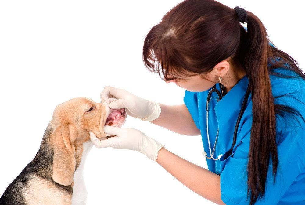 Болеют ли животные коронавирусом: как обезопасить своего питомца?