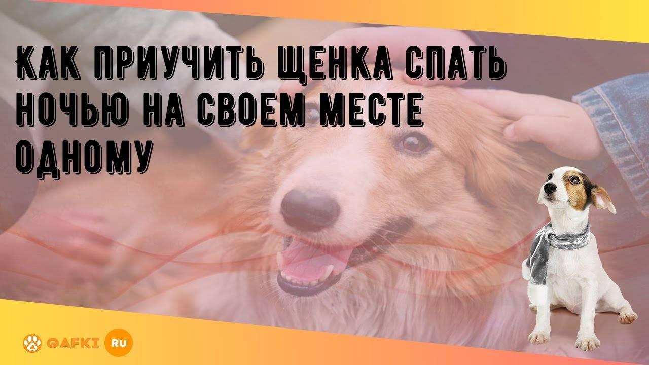 Собака перестала спать ночью. обучаем щенка спать ночью