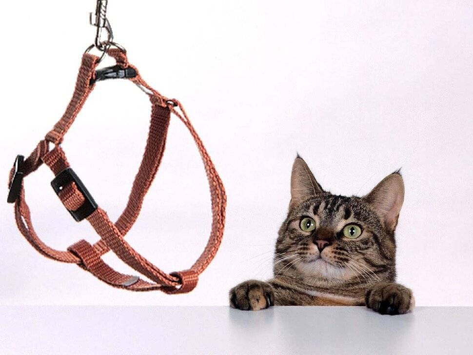 Как сделать поводок для кота своими руками?