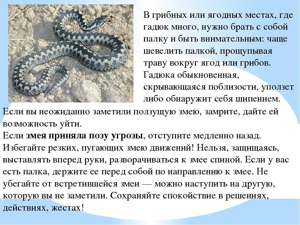 Как защититься от змей на даче и в лесу на supersadovnik.ru