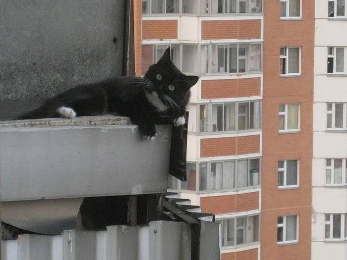 Пушистое счастье. приметы о трехцветной кошке в доме и не только