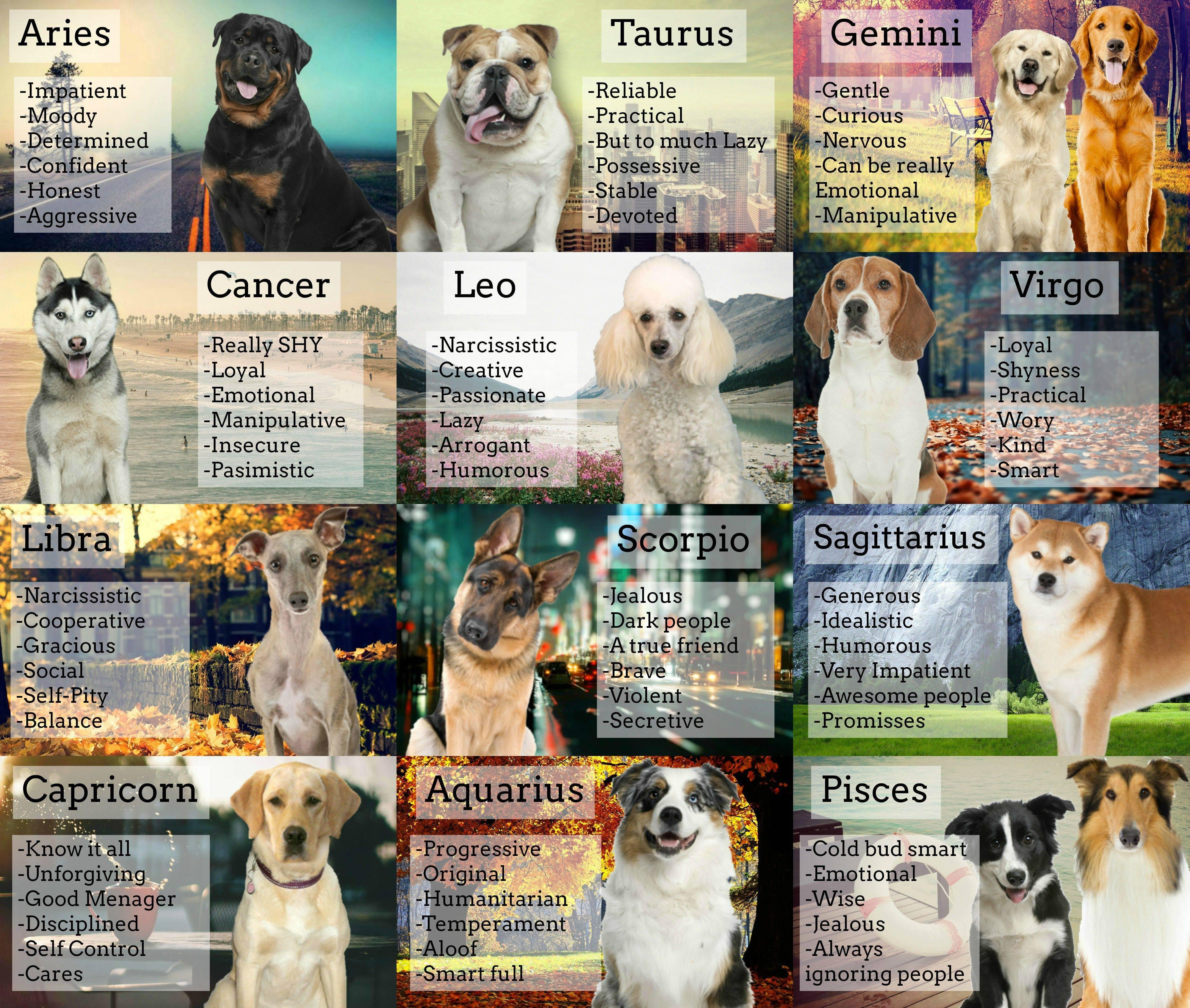 Собака по знаку зодиака: какая подходит близнецам и людям, которые рождены под иными созвездиями, и совместимость хозяина с породой питомца