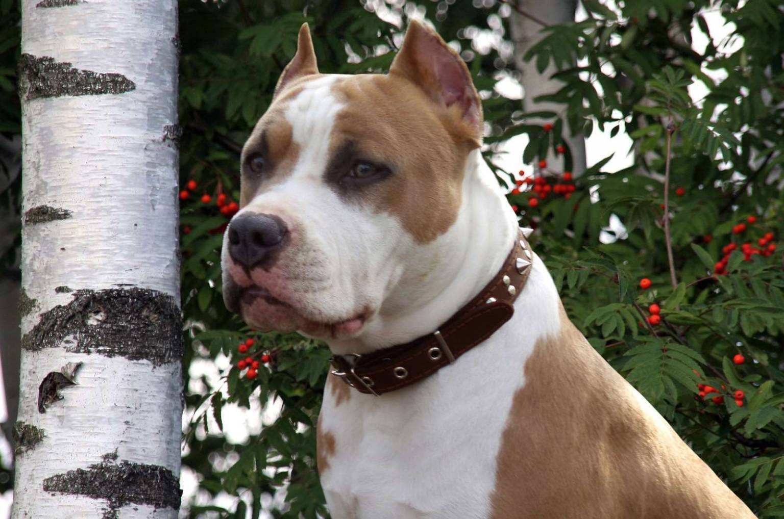 Топ-10 самых сильных собак в мире: по боям, самый сильный укус