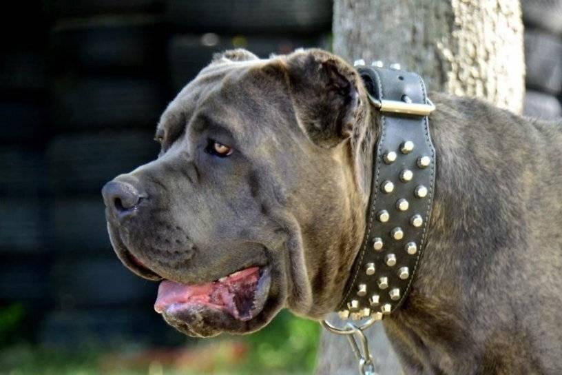 Выгул собак без намордника: статья, описание и характеристика