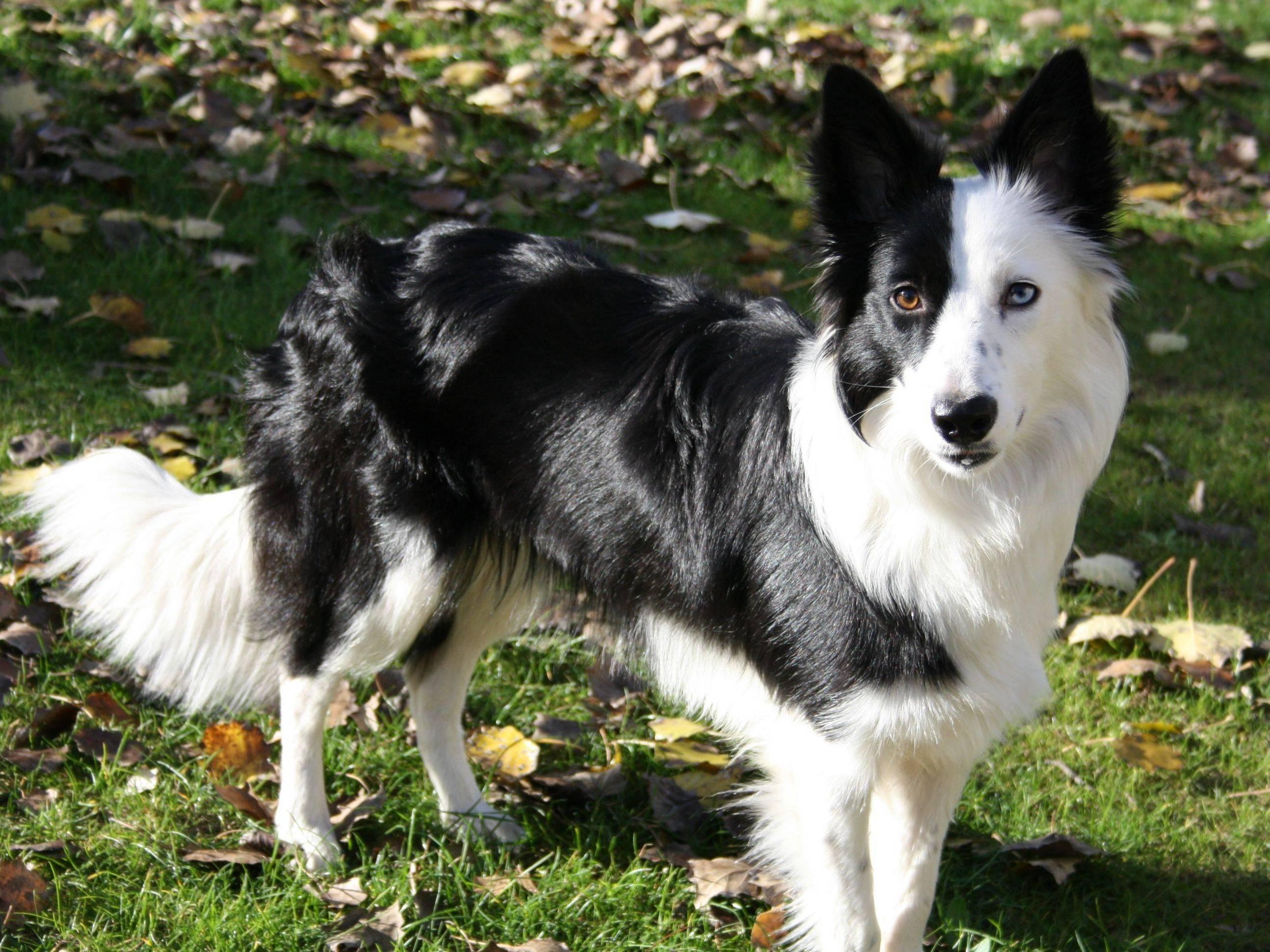 Лучший друг собаковода-новичка: какие собаки самые умные