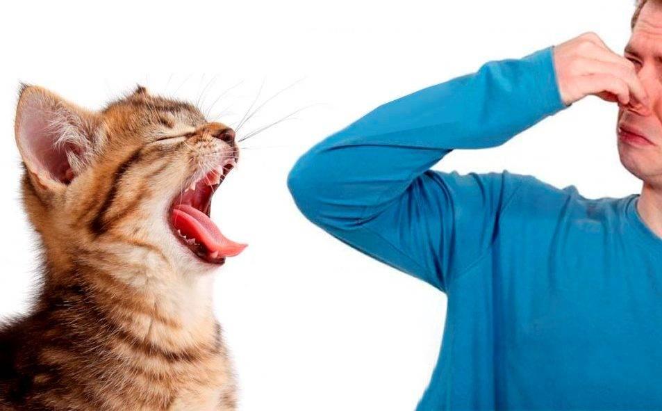 Запах изо рта у кошки: причины и методы лечения