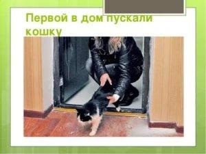 Как кошки переносят смену хозяев. переезд в новую квартиру, новый дом с кошкой или котом