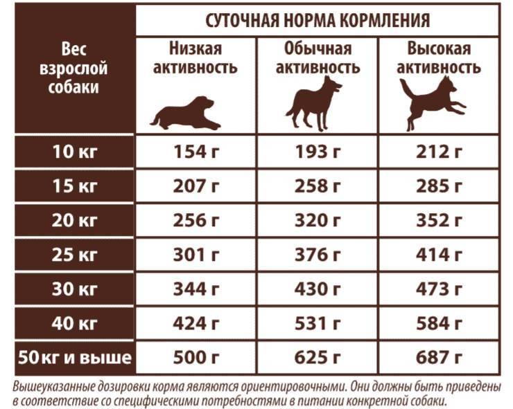 Советы и видео: как правильно кормить взрослую собаку, в т.ч. дворнягу, сухим и натуральным кормом: порции, график