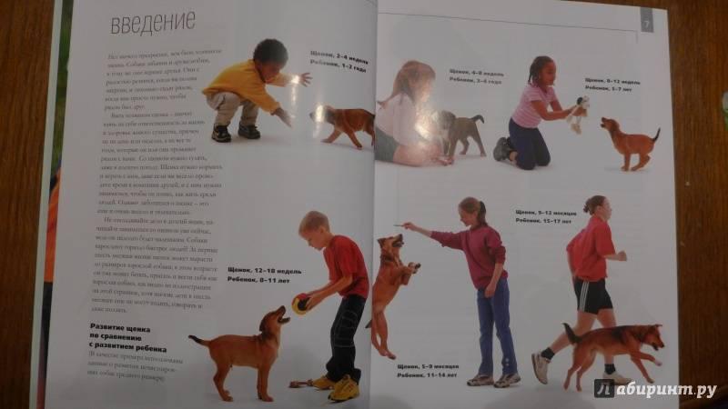 Как правильно воспитывать щенка. с чего начать воспитание щенка.