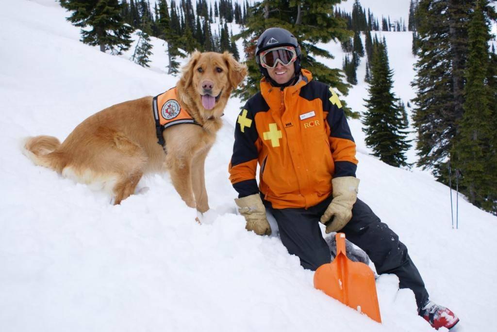 Собаки на службе у человека: список собачьих профессий