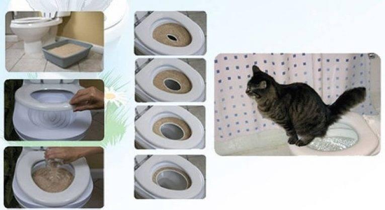 Как приучить котенка к унитазу в домашних условиях: инструкция по приучению животного к туалету