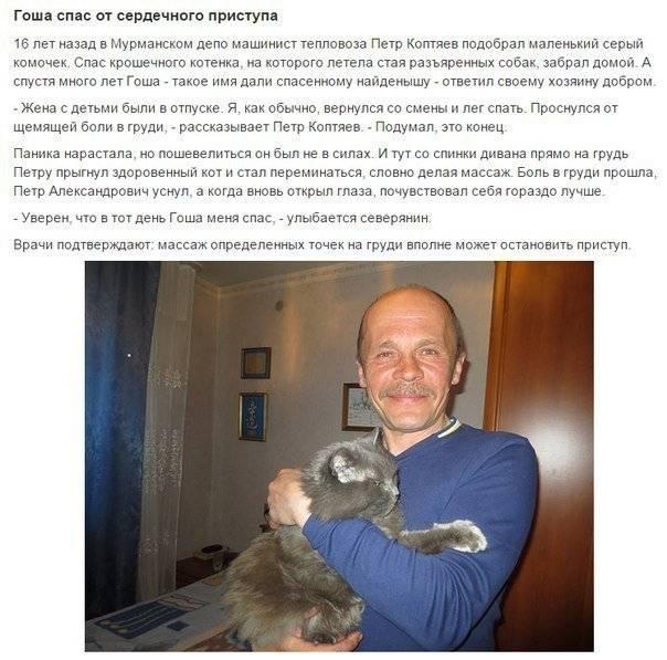 15 героических котов, которые спасли жизнь своим хозяевам · factonim