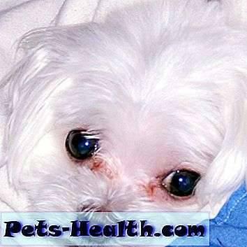 Почему собаки плачут?