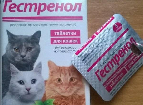 Регуляция половой охоты кошек котов собак