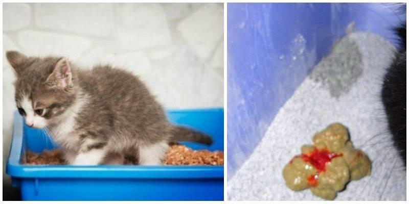 Когда котята начинают есть самостоятельно и как их этому научить?