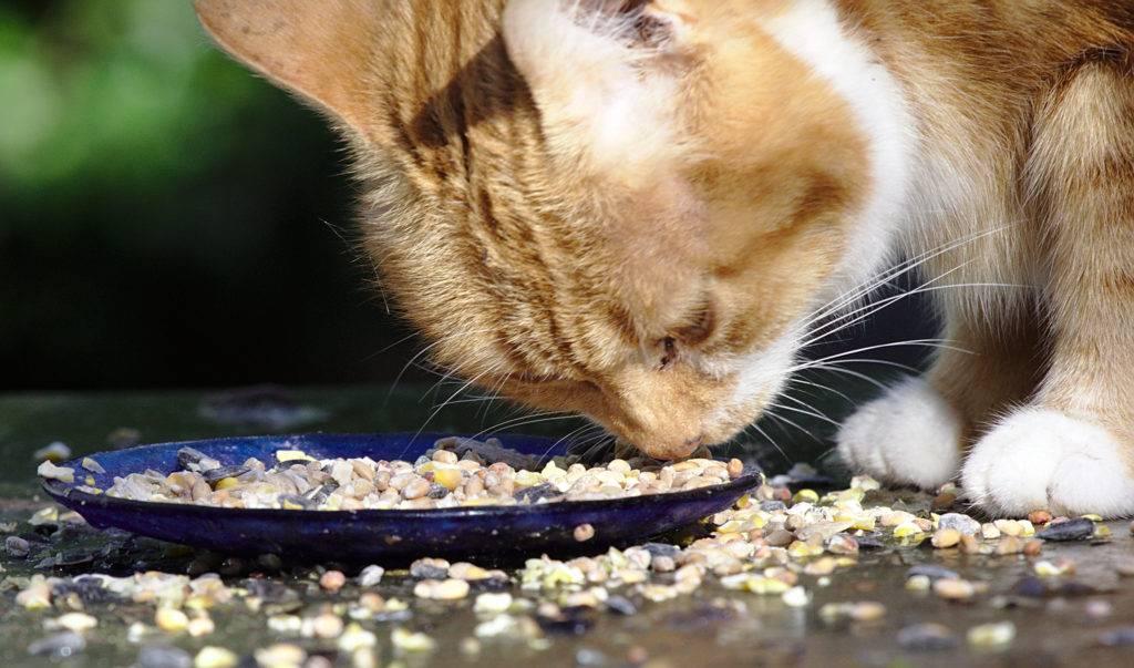 Кот плохо ест. кот мало ест. почему домашний кот стал мало кушать