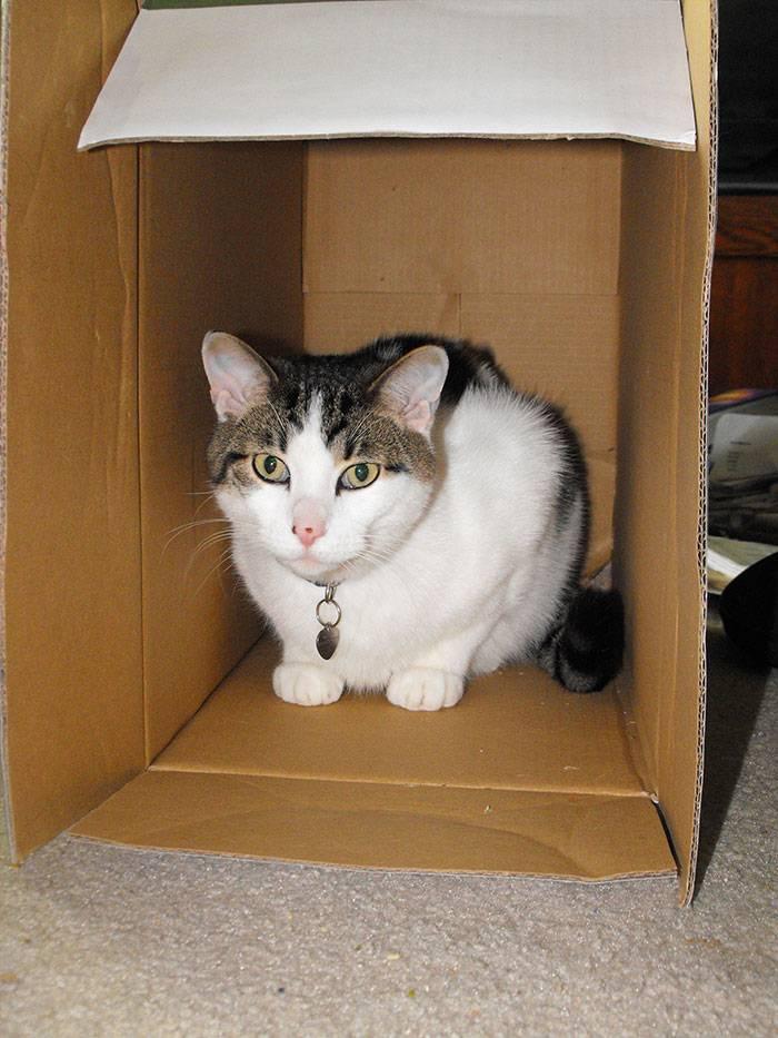 Почему коты так любят коробки